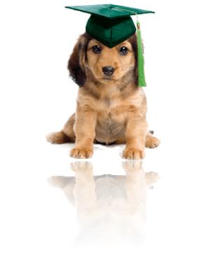 Basic Dog Obedience Training